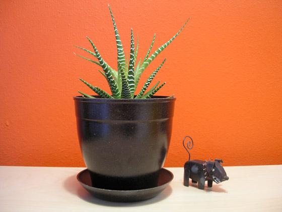 EcoForm Pot