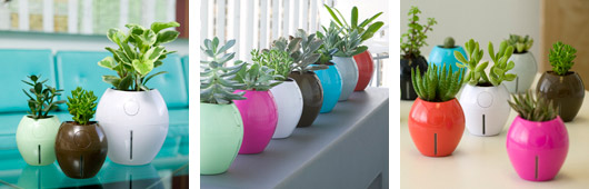Self-watering Pots by Grobal