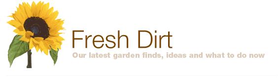 FreshDirt_blog