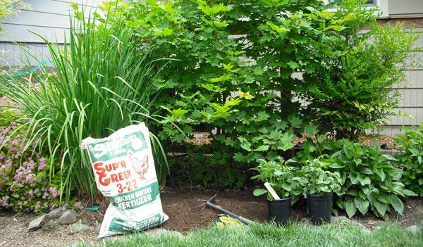 potato_garden