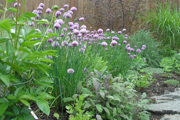Herb_garden_view