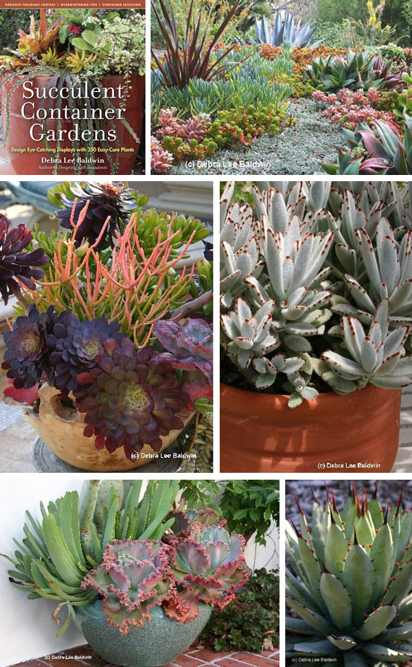 Nest in style a practical guide for the modern garden - Succulent container gardens debra lee baldwin ...